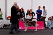 CACIB DOG SHOW TULLN 27-28.09.2014