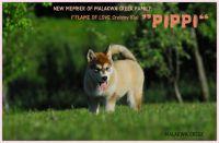 pippi1